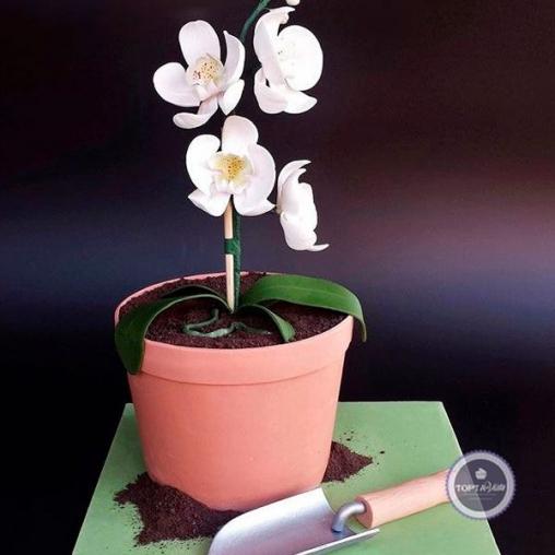 торт для женщин садовница